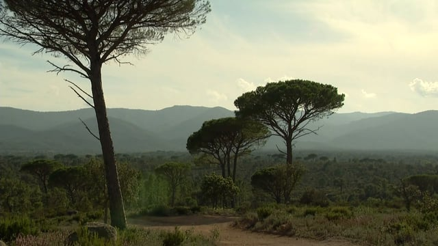 L'arrière-pays de Saint-Tropez