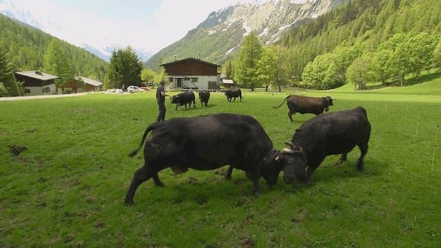 A la frontière des Alpes et du Jura